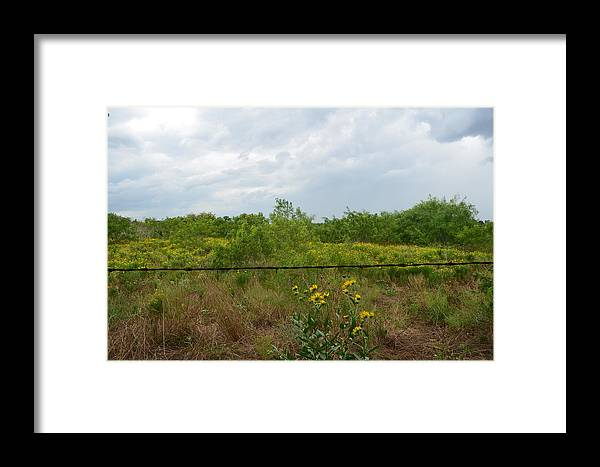 Sun Flower Framed Print featuring the photograph The Other Side Of The Fence by Kelly Kitchens