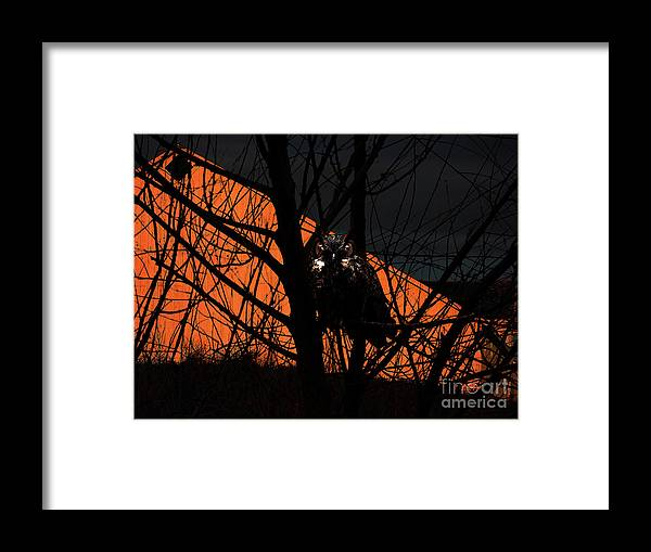 Animal Framed Print featuring the photograph The Owl And The Old Ranch by Wingsdomain Art and Photography