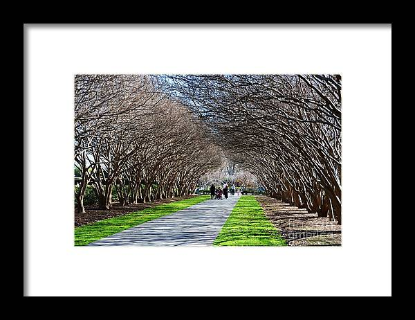 Arboretum Framed Print featuring the photograph The Path by Debbi Granruth
