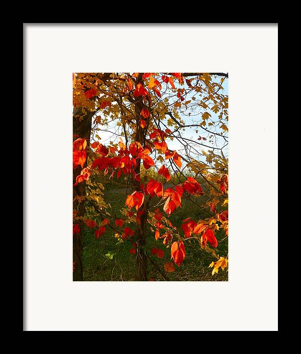 Autumn Framed Print featuring the photograph The Reds Of Autumn by Julie Dant