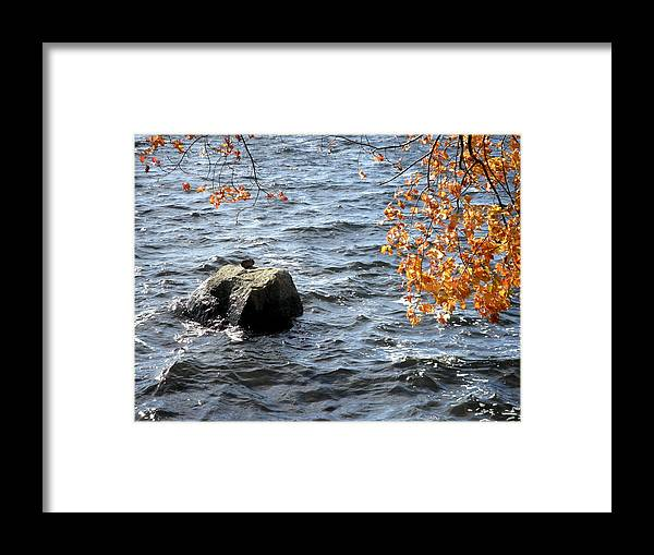 Rock Framed Print featuring the photograph The Rockness Monster by Kate Gallagher