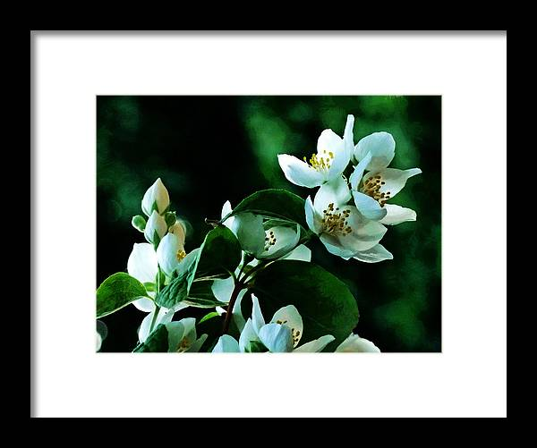 White Framed Print featuring the photograph The Soft White Blossom by Steve Taylor