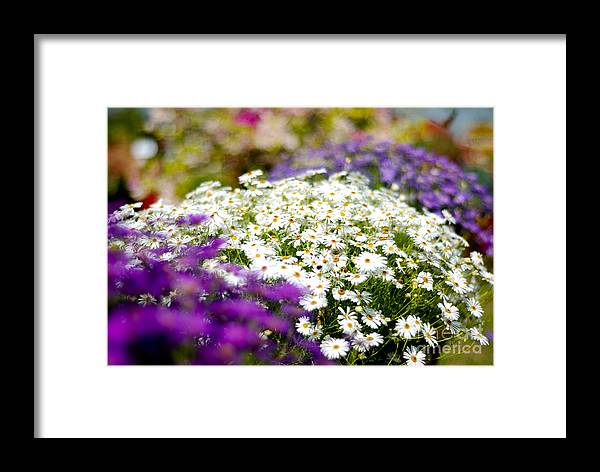 Flower Framed Print featuring the photograph The Symmetry by Syed Aqueel