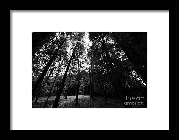 Trees Framed Print featuring the photograph The Trees by Gary Bridger