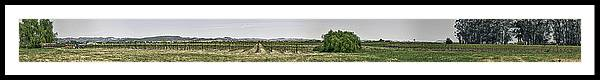 Hdr Framed Print featuring the photograph The Vineyard by Nathaniel Kolby