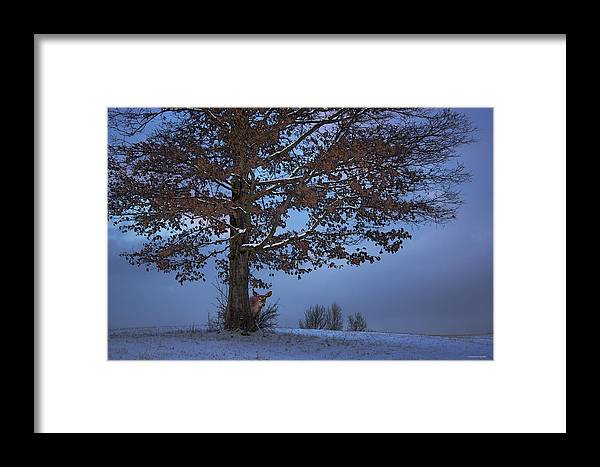 Ron Jones Framed Print featuring the photograph The Wary Model by Ron Jones