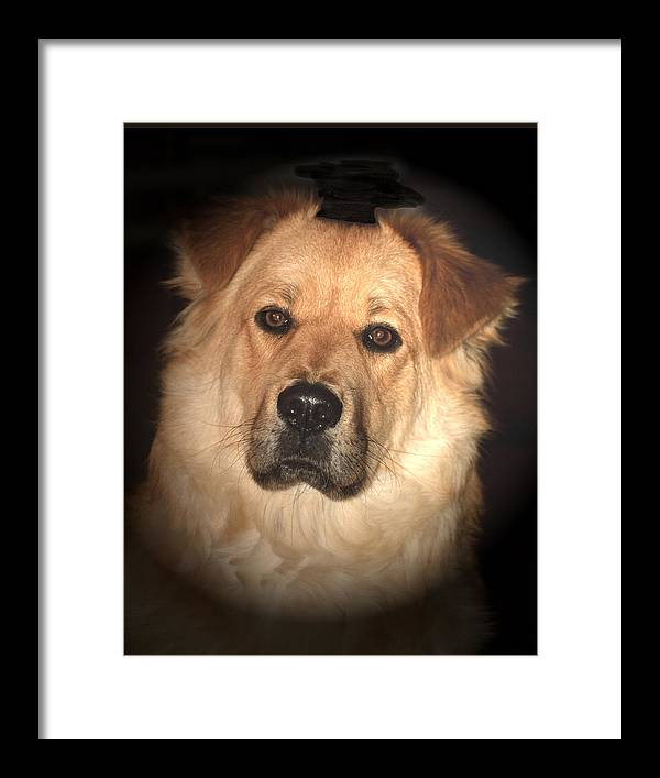 Dog Framed Print featuring the photograph The Watch Dog by Don Saxon