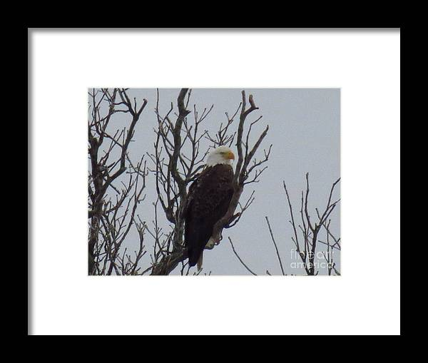 Nature Framed Print featuring the photograph The Watcher by Rrrose Pix