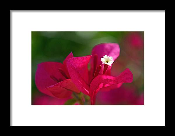 Flower Framed Print featuring the photograph These Three Things... by Melanie Moraga