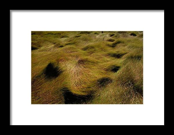 Outdoors Framed Print featuring the photograph Thick Grasses Blow In The Wind And Form by Todd Gipstein