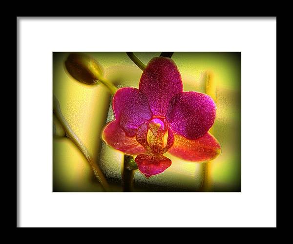 Flower Framed Print featuring the digital art Think Of Spring Time by Teri Schuster