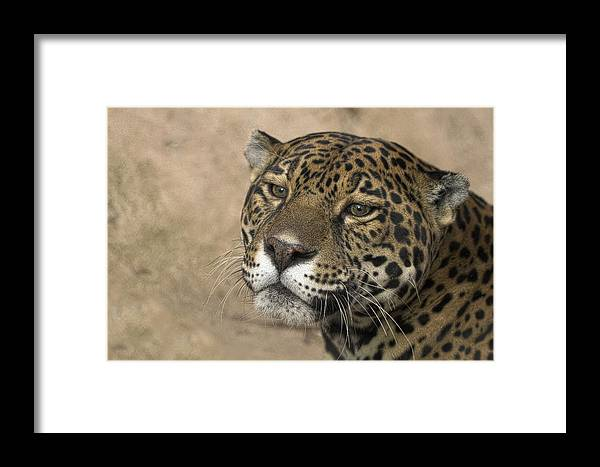 Animals Framed Print featuring the photograph Thinking by Cheri McEachin