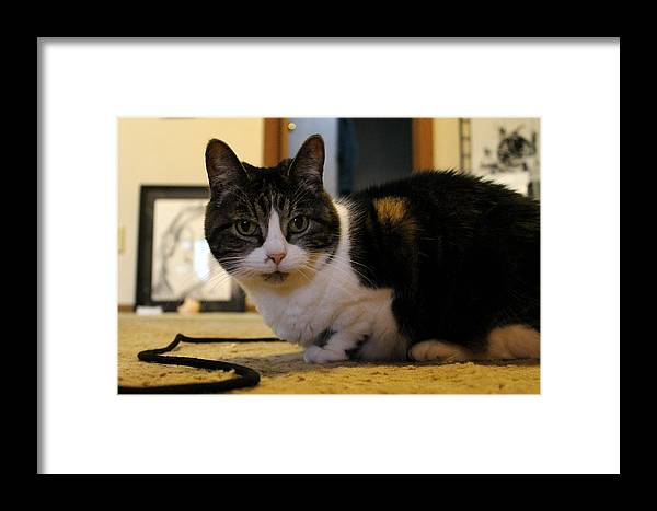 Big Mike Roate Framed Print featuring the photograph This Is My String Buster by Big Mike Roate