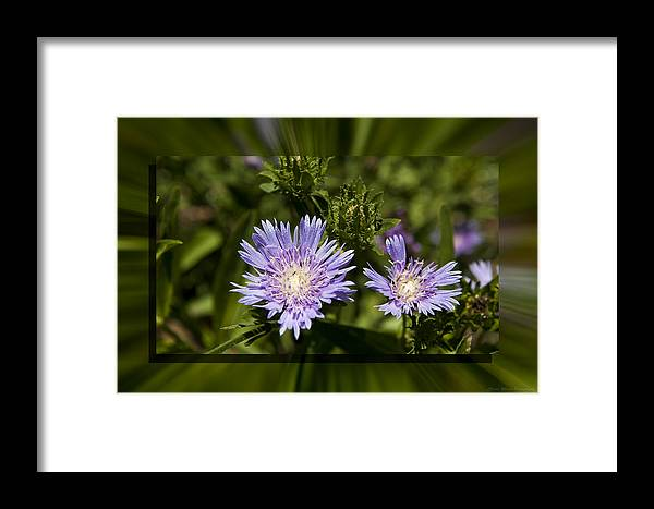 Thistle Framed Print featuring the photograph Thistle 131 by Charles Warren