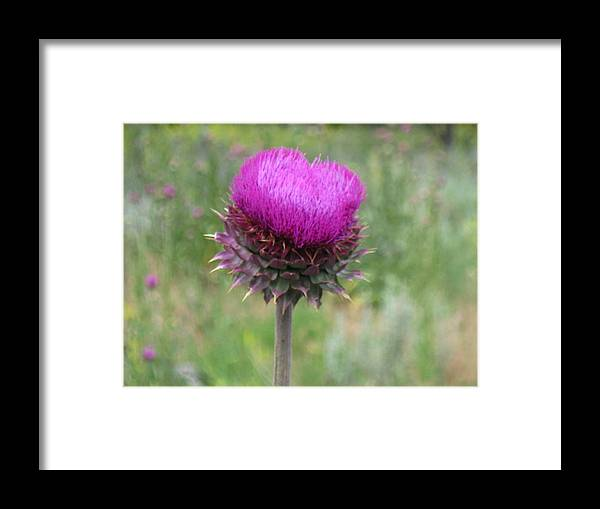 Heart Framed Print featuring the photograph Thistle Heart by Amara Roberts
