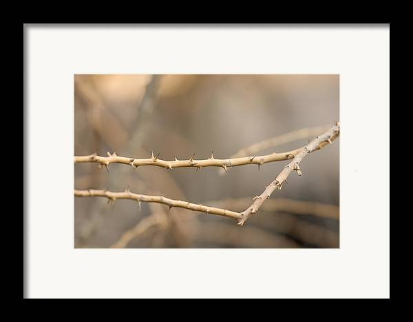 Photography Framed Print featuring the photograph Thorny Desert Plant Inside The Desert by Joel Sartore