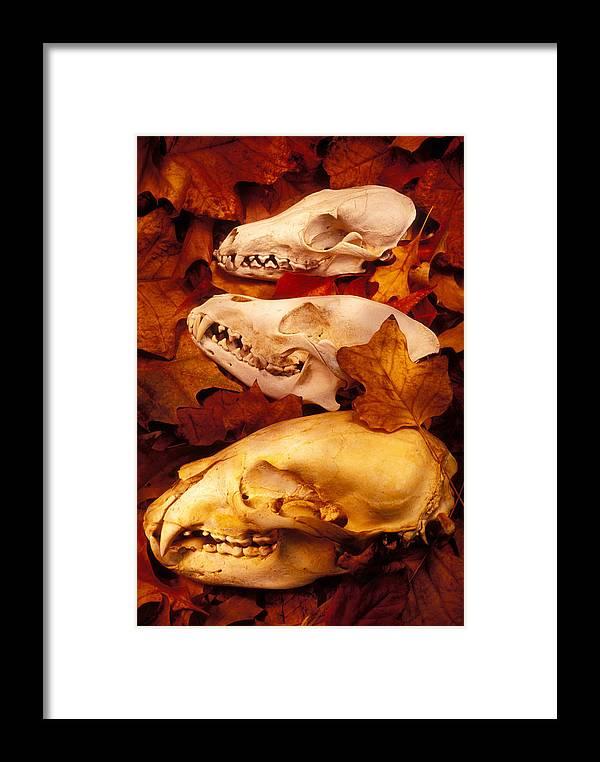 Three Animal Skulls Framed Print featuring the glass art Three Animal Skulls by Garry Gay