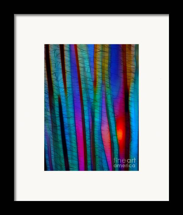 Trees Framed Print featuring the photograph Through The Trees by Judi Bagwell