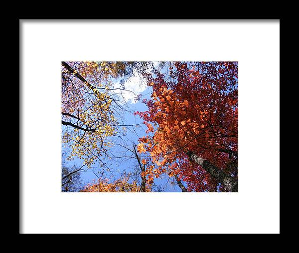 Framed Print featuring the photograph Through The Trees by Hickory Tree Productions