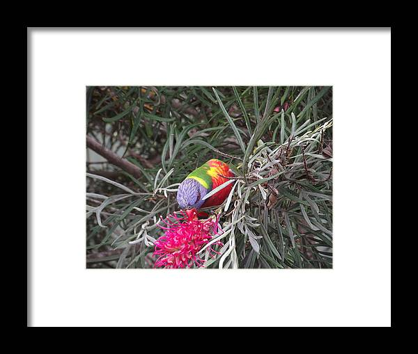Bird Framed Print featuring the photograph Time For Some Nectar by Rani De Leeuw
