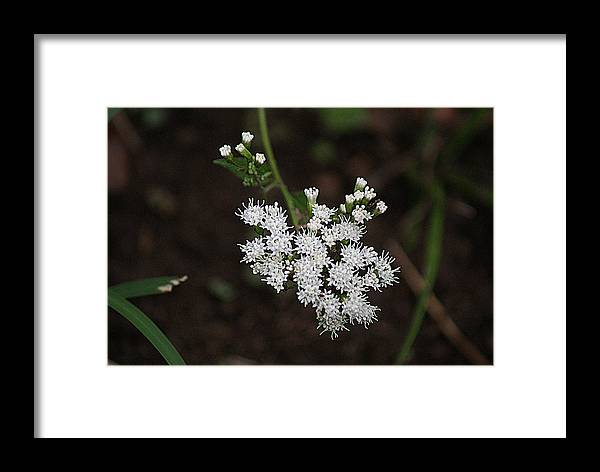 Wild Flowers Framed Print featuring the photograph Tiny Wild Flowers by Rick Friedle
