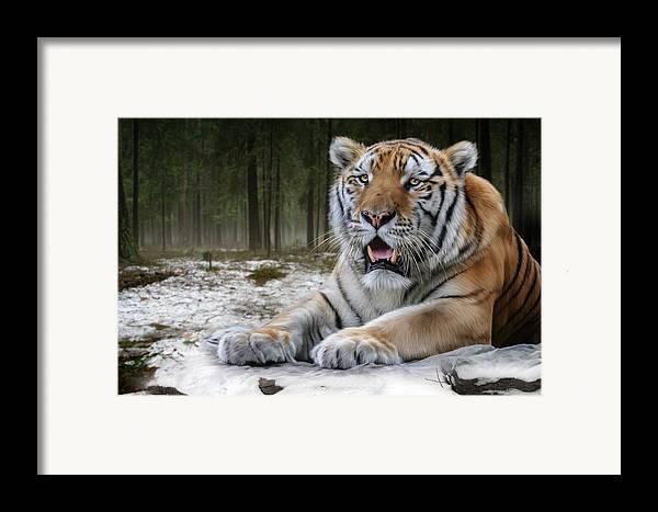 Tj Framed Print featuring the digital art TJ by Big Cat Rescue