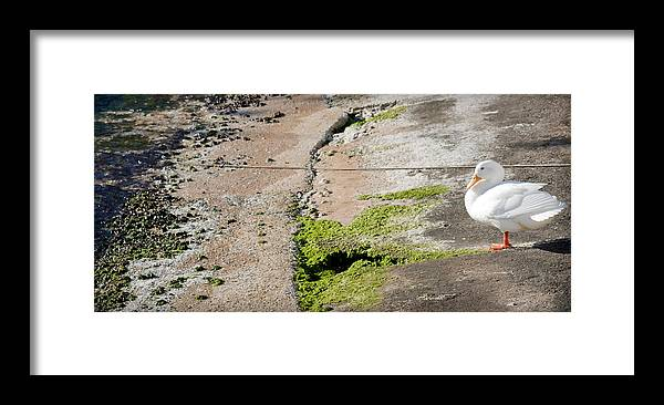 Sea Framed Print featuring the photograph to swim or not to swim - A beautiful white duck ready to get into the sea or not by Pedro Cardona Llambias