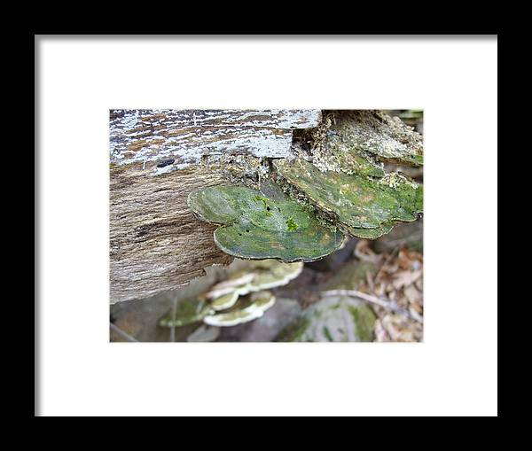 Mushrooms Framed Print featuring the photograph Toad Stool by Angela Partridge