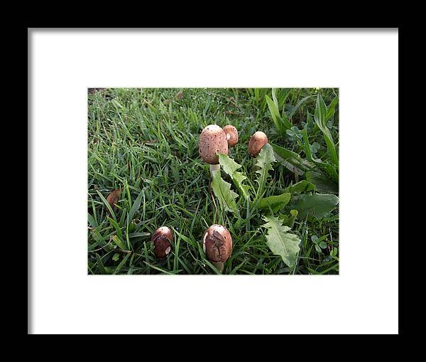 Toad Stools Framed Print featuring the photograph Toad Stool Family by Rani De Leeuw
