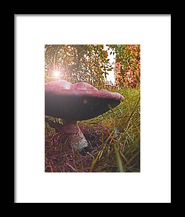 Toadstool Framed Print featuring the photograph Toadstool by Robin Cox