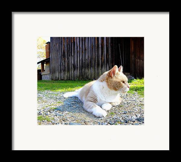 Cat Framed Print featuring the photograph Toby Old Mill Cat by Sandi OReilly