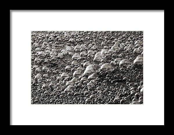 Pond Scum Framed Print featuring the photograph Todays Political Climate by Melissa Wyatt