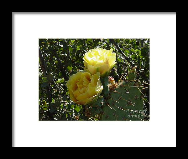Cactus Framed Print featuring the photograph Together Forever by Daniel and Rose Barba