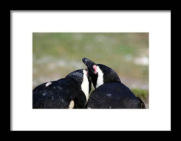 Penguin Framed Print featuring the photograph Together Forever by Deborah Hall Barry