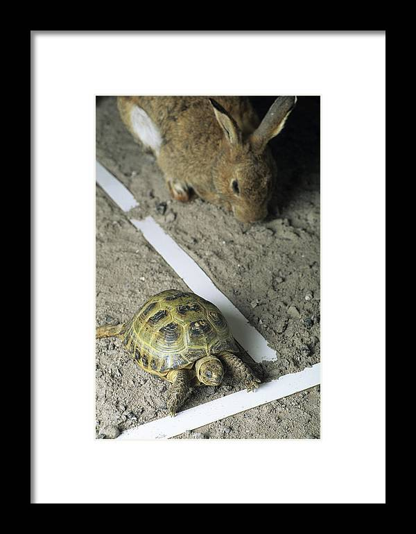 Lepus Sp. Framed Print featuring the photograph Tortoise And Hare by David Aubrey
