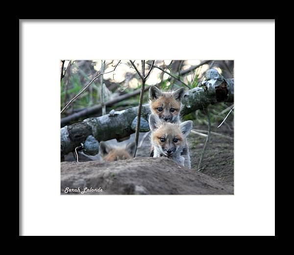 Kits Framed Print featuring the photograph Totem Pole by Sarah Lalonde