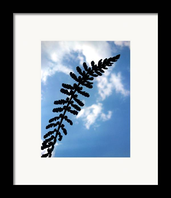 Sky Framed Print featuring the photograph Touch The Sky by Lucy D