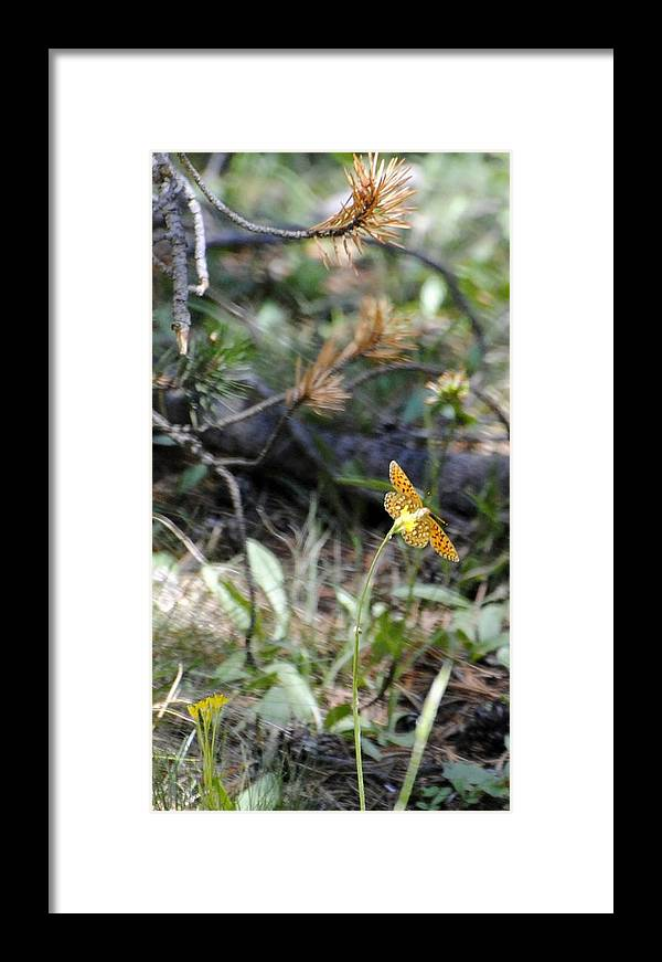 Butterfly Framed Print featuring the photograph Toulumne Butterfly by Meagan Suedkamp