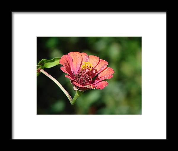 Flower Framed Print featuring the photograph Toward The Sun by Brenda Conrad