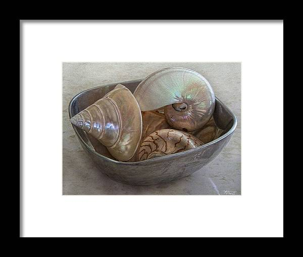 Shells Framed Print featuring the photograph Treasures From The Sea by Marilyn Atwell