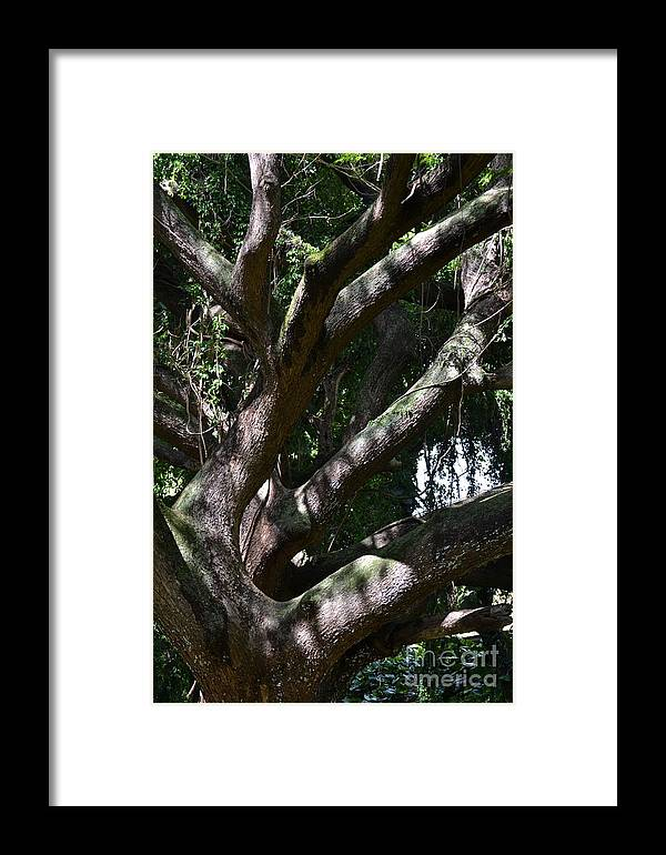 Tree Framed Print featuring the photograph Tree by Art Kleisen