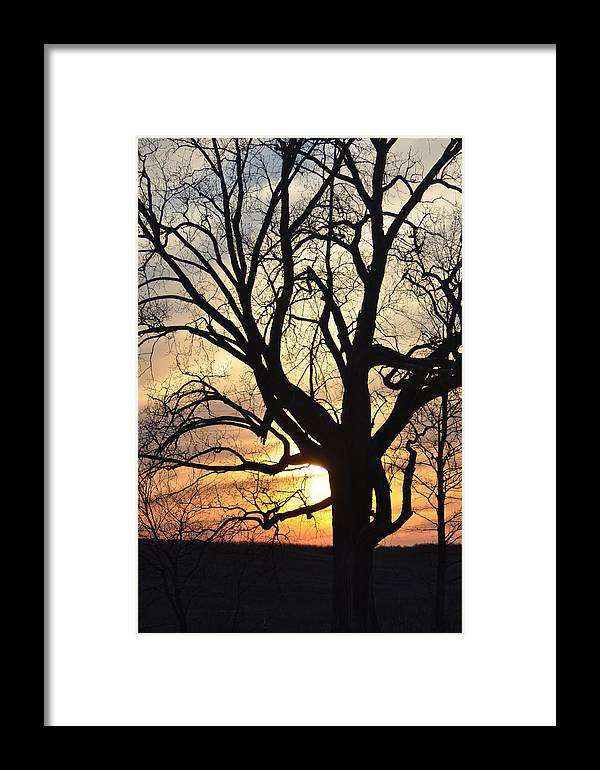 Sunset Framed Print featuring the photograph Tree Art by Valarie Davis
