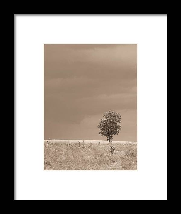 Nature Framed Print featuring the photograph Tree Before Storm Sepia by Tallulah P
