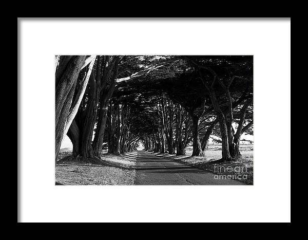 Tree Canopy Promenade Road Drive 7d9977 Black And White Framed