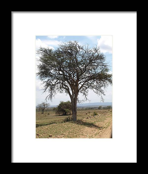 Tree Framed Print featuring the photograph Tree by Carol Evans
