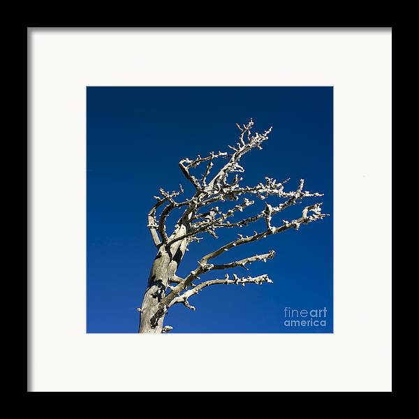 Wintry Framed Print featuring the photograph Tree In Winter Against A Blue Sky by Bernard Jaubert