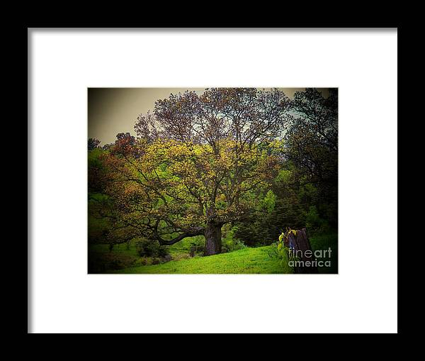 Spring Framed Print featuring the photograph Tree by Joyce Kimble Smith