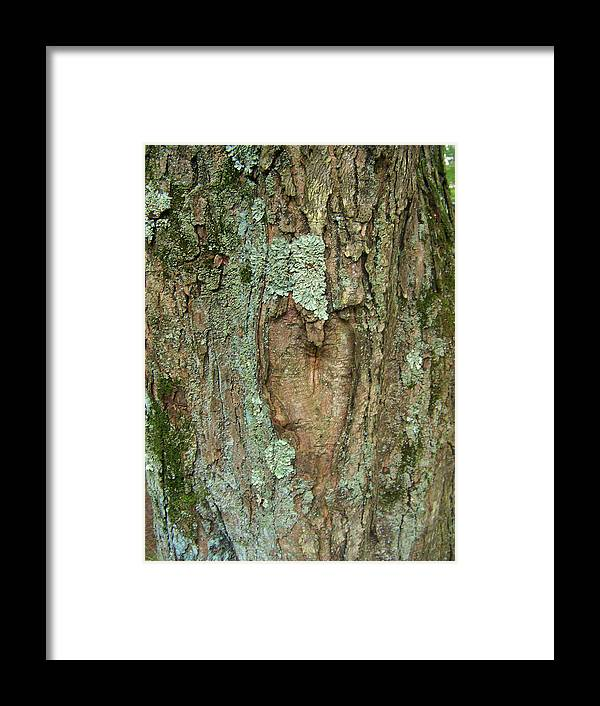 Tree Framed Print featuring the photograph Tree Love by Natalie Long