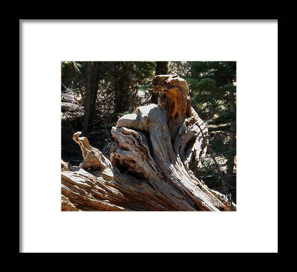Tree Stump Framed Print featuring the photograph Tree Of Many Faces by Gary Brandes