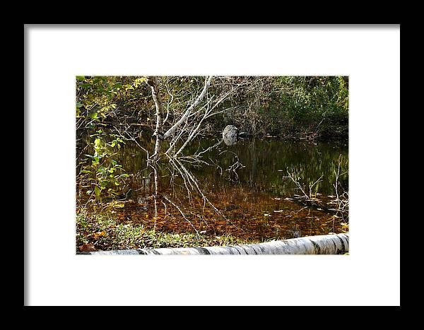 Usa Framed Print featuring the photograph Tree Reflections Stoney Creek by LeeAnn McLaneGoetz McLaneGoetzStudioLLCcom